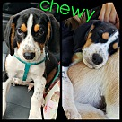 Adopt A Pet :: Chewy