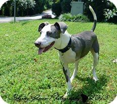 Hound (Unknown Type) Mix Puppy for adoption in Atlanta, Georgia - Brayden