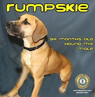 Adopt A Pet :: Rumpskie  - Nicholasville, KY