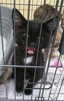 Adopt A Pet :: Bagera  - Mt Vernon, IN