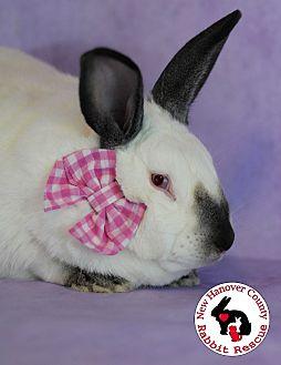 Adopt A Pet :: Cilantro  - Wilmington, NC