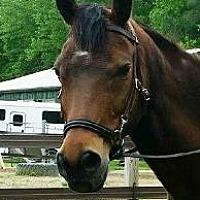 Adopt A Pet :: Presto - Laurel, DE