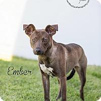Adopt A Pet :: Ember - Long Beach, CA