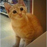 Adopt A Pet :: Cricket - Stuarts Draft, VA