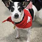 Adopt A Pet :: Chloe S