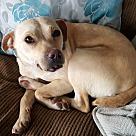 Adopt A Pet :: Silva
