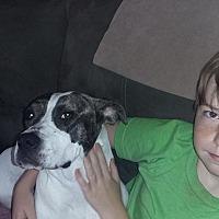 Adopt A Pet :: Pearl - Covington, TN
