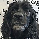 Adopt A Pet :: Darla