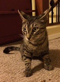 Adopt A Pet :: PT  - Phoenix, AZ