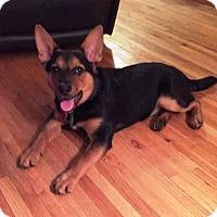 Adopt A Pet :: Baby Bear - Minneapolis, MN
