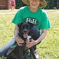 Adopt A Pet :: Otto - Midlothian, VA