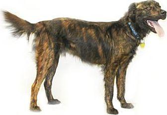 Inverness Fl Border Collie Meet Dodge A Pet For Adoption