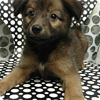 Adopt A Pet :: ALEXIA - Tampa, FL
