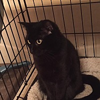 Adopt A Pet :: Bella - Virginia Beach, VA