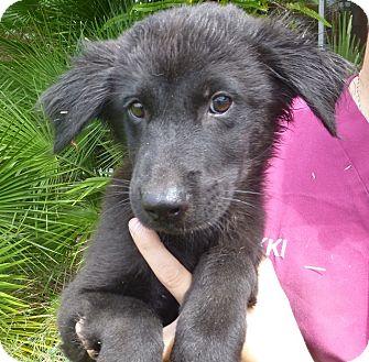Oviedo Fl Golden Retriever Meet Jessie A Pet For Adoption