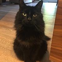 Adopt A Pet :: Stormy - Davis, CA