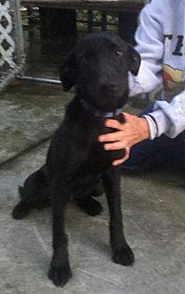 Adopt A Pet :: Barton  - Edisto Island, SC