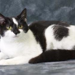 Homeward Bound Pet Adoption Center - Camden County Animal Shelter in