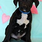 Adopt A Pet :: Hamey