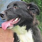 Adopt A Pet :: Ava Rose