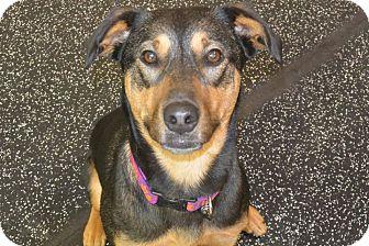 Dog Adoption Meridian Idaho