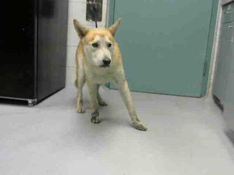 Adopt A Pet :: CARMELLO  - Wilmington, NC