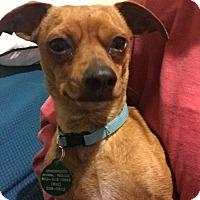 Adopt A Pet :: Dixon - Starkville, MS