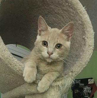 Adopt A Pet :: JJ  - Devon, PA