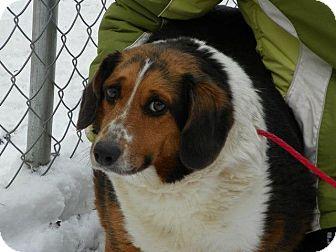 Grand Rapids Mi Beagle Meet Lilly A Pet For Adoption
