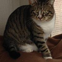 Adopt A Pet :: BEAU - MECHANICSVILLE, VA