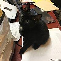 Adopt A Pet :: Sparky - Hudson, NY