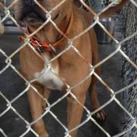 Adopt A Pet :: Claire - Dublin, GA