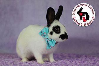 Adopt A Pet :: Opie  - Wilmington, NC