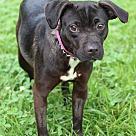 Adopt A Pet :: Isabel