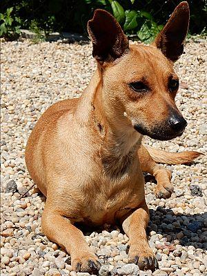 Dog Adoption Long Beach Ny