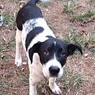 Adopt A Pet :: Raine
