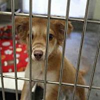 Adopt A Pet :: A051499 - Upland, CA