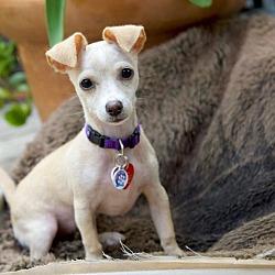 Puppies for Sale in Arcadia California - Adoptapet com