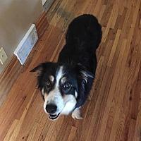 Adopt A Pet :: Millie - Minneapolis, MN