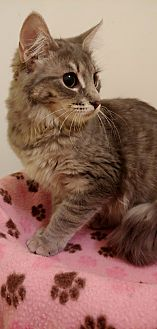 Whimsical **adoption pending**