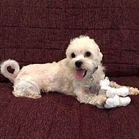 Adopt A Pet :: Fitz - Atlanta, GA