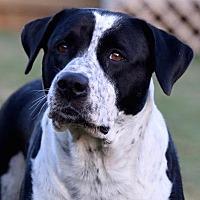 Adopt A Pet :: Luci - CUMMING, GA