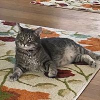 Adopt A Pet :: Meeko (COURTESY POST) - Baltimore, MD