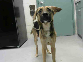 Adopt A Pet :: ZEUS  - Wilmington, NC