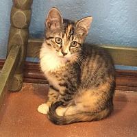 Adopt A Pet :: Quinn - Weatherford, OK