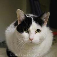 Adopt A Pet :: Kismit - Winona, MN