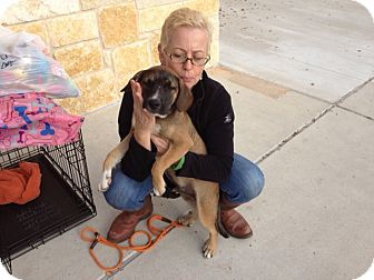 Hound (Unknown Type) Mix Puppy for adoption in Seguin, Texas - Whippersnapper