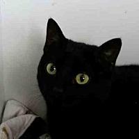Adopt A Pet :: LUNA - Rogers, AR