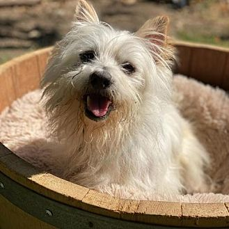 Adopt A Pet :: Walter  - Santa Clara, CA