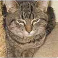 Adopt A Pet :: Spotty Muldoon - Milwaukee, WI